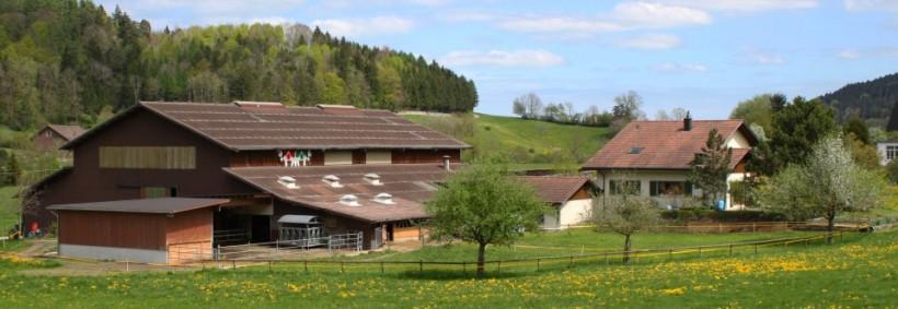 Lindenhof Mai 2012